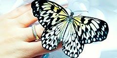 Поймай бабочку