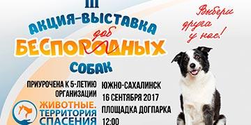Третья сахалинская выставка беспородных собак