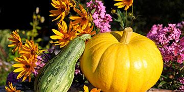 Осенний натюрморт с натуры