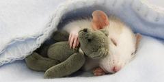 Мышка в гостях у Мишки