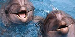 Московский передвижной дельфинарий